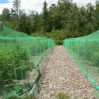 Green knitted bird netting is installed over the seedlings